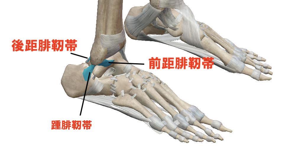 足首の内返し捻挫とは